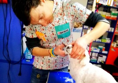 cosmetica-frizerie-animale-companie (14)