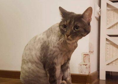 cosmetica-frizerie-animale-companie (7)
