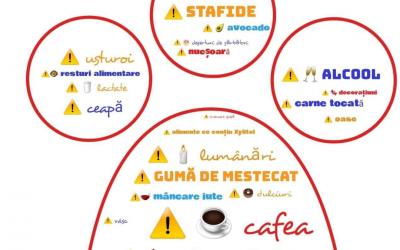 Ciocolata – pericol pentru animalele de companie